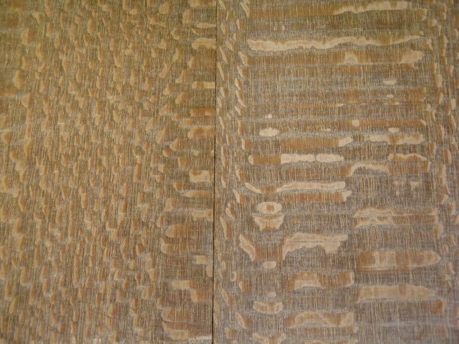 Leopardwood or Roupala brasiliense
