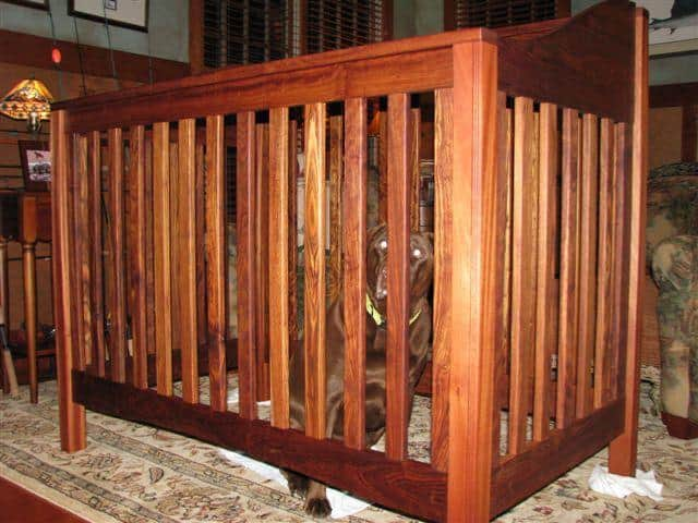 Dogs Love Caribbean Rosewood.... Thanks again Patrick M!